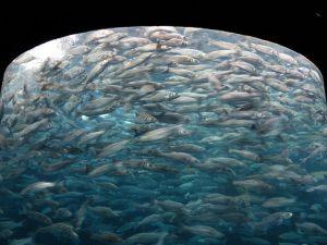 Saltwater Fishing Live Bait