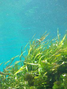 Underwater Kelp Bed